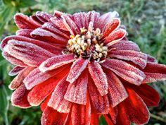 First frost in my garden!