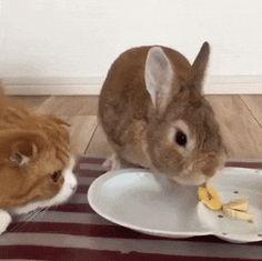 Can I eat rabbit?