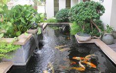 carpes koï dans le bassin de jardin avec cascades, entouré de plantes aquatiques