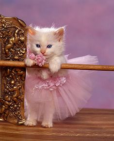 Want more cute kittens like this? TAP the photo for more! Cute Kittens, Cats And Kittens, Kitty Cats, Cute Baby Animals, Animals And Pets, Funny Animals, Funniest Animals, Funny Cats, Beautiful Cats