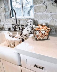 Baby goats are ALWAYS better than dirty dishes in a sink! 🐐 How cute are these little ones? Do you own or want goats? 😍 TAG a friend who… Baby Farm Animals, Cute Little Animals, Animals And Pets, Funny Animals, Casa Magnolia, Terrarium Reptile, Cute Goats, Fresh Farmhouse, Farmhouse Style