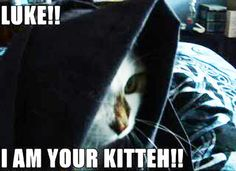 luke, i ish ur kitteh