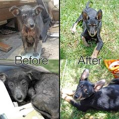 Here's a before and after picture of the puppy Branson showing what a huge difference proper love, care and treatment can make - and how your donations truly help. The after pictures were both taken yesterday where he was hanging out as usual at our adoption day stall. He's a lovely little character and its been great to see him recover. He's since been adopted.