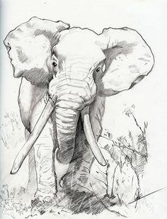 24 Ideas simple art drawings pencil deviantart for 2019 Elephant drawing Elephant Sketch, Elephant Love, Elephant Art, Elephant Tattoos, Elephant Drawings, Pencil Drawings Of Animals, Animal Sketches, Drawing Sketches, Art Drawings