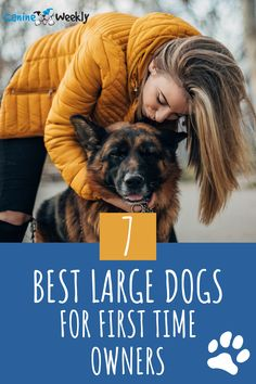 First-time dog owners can be poorly advised that large breeds are not for them – and this is just not the case. There are so many large and even giant breeds that are perfect for first-time dog owners. Here are 7 best large dogs for first time dog owners. Top Dog Breeds, Large Dog Breeds, Large Dogs, All Dogs, Best Dogs, Giant Dog Beds, Socializing Dogs, Tibetan Mastiff, Loyal Dogs