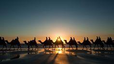 Images Camels Egypt Cairo Nature Desert Palms Stones Animals