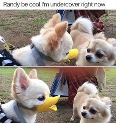Funny Animal Pics More