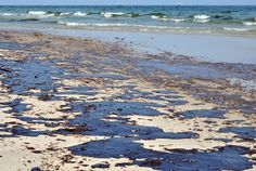 "In an attempt to limit the harm of the Deepwater Horizon oil spill in the Gulf of Mexico in 2010, three million liters of dispersant were used to dissipate the oil. ""The question is whether that was the best approach,"" said Tinka Murk, Professor of Environmental Toxicology at Wageningen University. On the surface the damage"