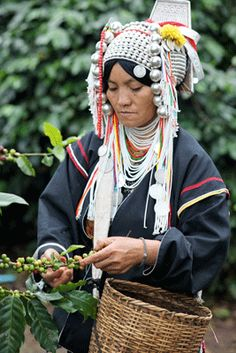 ✯ A member of the Akha tribe harvests coffee beans in Doi Chaang, Thailand. Photos by Matthew Kadey✯