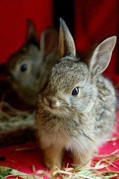 Country red with bunny rabbits...
