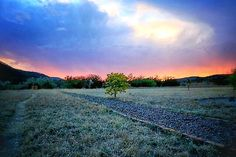 On instagram by el_detective_salvaje #landscape #contratahotel (o) http://ift.tt/1TuJ6Hs un  árbol vive en  mi u n a c a s c a d a u n a t a e d e c e r e l e s p a c i o  e l s i l e n c i o t o d o s l a s c a r n a l a s t o d a s l o s c a r n a l e s g r a c i a s K a r e n  g r a c i a s D i e g o  u n á r b o l v i v e e n m i . . . y e l v i e n t o   _lovers _captures #paisaje #paisajes #paisajes_mexico #sunset #horizon #horizonte #árbol #atardecer #tree #trees #travel #instasky…