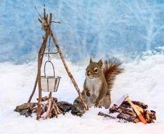 Photographer Nancy Rose builds tiny sets in her back yard for squirrels to interact with.