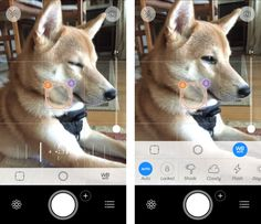 Best camera apps for iPhone: Camera+
