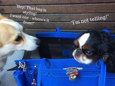 All the pups want one! #APetWithPaws #PetCarrier #Designer