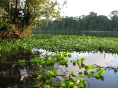 The 47,000-acre coastal preserve Tortuguero National Park contains a network of waterways only navigable by boat. Costa Rica