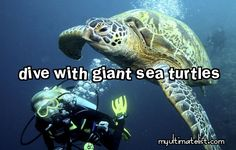 Swim with giant sea turtles- DONE