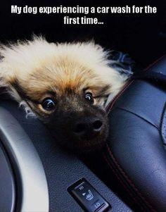 Funny Dog's First Car Wash