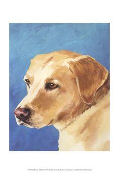 Dog Portrait, Yellow Lab