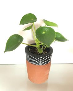 Las cucharitas siempre son las favoritas! Una más que se va su hogar 😍Tenemos más disponibles 👏🏼👏🏼 Plant Care, Evergreen, Planter Pots, Tropical, Tips, Spoons, Plants, Home, Counseling