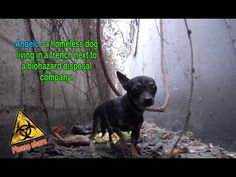 Angelo - a homeless dog living in a trench next to a biohazard disposal ...
