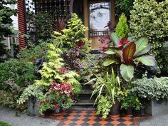 Front Steps Container Planting