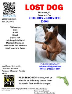 Lost Dog - Chihuahua - Miramar, FL, United States