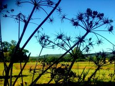 Free photo Farm Silhouette Farming Nature Agriculture - Max Pixel
