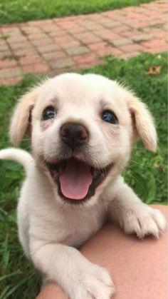 puppies tips & puppies tips ; puppies tips care ; puppies tips life hacks ; puppies tips bringing home ; puppies tips diy ; puppies tips and tricks ; puppies tips pet care ; puppies tips training Tiny Puppies, Cute Dogs And Puppies, Baby Dogs, Pet Dogs, Adorable Puppies, Doggies, Cutest Dogs, Teacup Puppies, Cute Puppy Pics