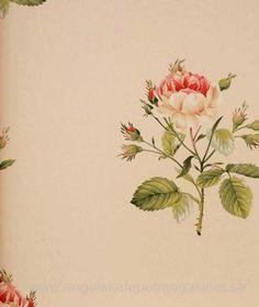 Sanderson English Rose Tapet
