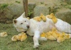 犬 ひよこ - Google 検索