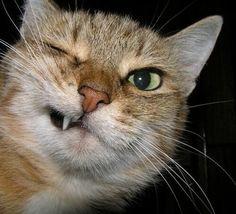 CAT WINK | Flickr - Photo Sharing!