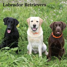 Labrador Retrievers Wall Calendar: With their shiny coats, big brown eyes, and sweet disposition, Labs are hard to resist. These intelligent, playful animals are full of love and devotion. This wall calendar is devoted to the fabulous Labrador Retriever, Yellow, Black and Chocolate.  http://www.calendars.com/2013-Black-Lab-Calendars/Labrador-Retrievers-2013-Wall-Calendar/prod201300004783/?categoryId=cat1270038=cat1270038