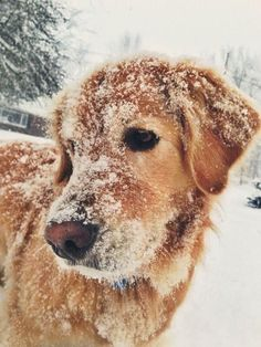 The Versatile Golden Retriever - Champion Dogs Animals And Pets, Baby Animals, Funny Animals, Cute Animals, Cute Creatures, Beautiful Creatures, Animals Beautiful, Beautiful Dogs, Cute Puppies