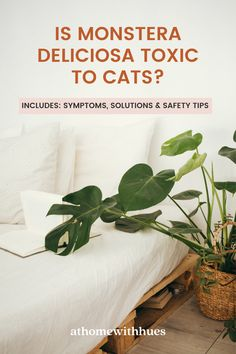 Monstera Deliciosas are popular houseplants thanks to their big, bright green leaves that grow year-round. Here's a helpful guide on how to keep the peace between your Monstera Deliciosa and your cats. Houseplants Safe For Cats, Cat Reading, Keep The Peace, Monstera Deliciosa, Safety Tips, Bright Green, Green Leaves, Popular, Big