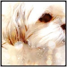 #dog #shihtzu #cameran #cameranapp