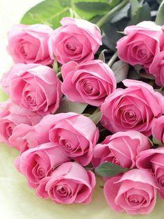 Facebook - Pretty roses