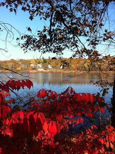 A fall afternoon at the Arlington Reservoir.