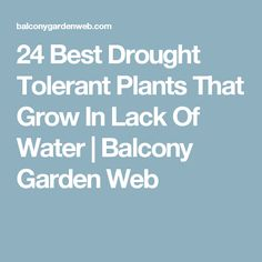 24 Best Drought Tolerant Plants That Grow In Lack Of Water | Balcony Garden Web