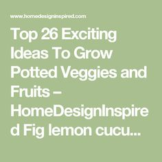 Top 26 Exciting Ideas To Grow Potted Veggies and Fruits – HomeDesignInspired  Fig lemon cucumber sprouts lettuce blueberries potaties and so on!