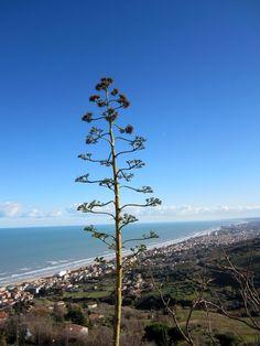 Panorama della costa da Silvi Paese - Abruzzo  http://www.uniquevisitor.it/abruzzo/mare/silvi-marina/foto-silvi-paese.php
