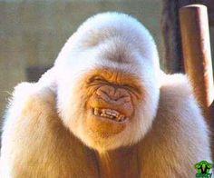 Crazy Monkey Art crazy-smile-monkey.jpg
