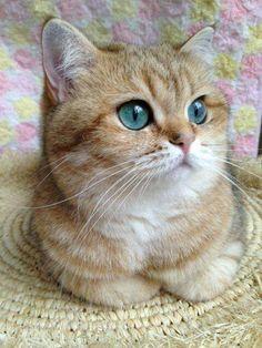 Oh, Those Big Beautiful eyes!!!!❤❤❤❤❤❤ kitties!!!