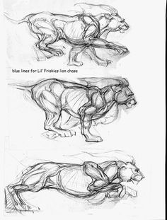 FULL CIRCLE - Old School to New School Drawing and Painting: Improve your drawing part 3 - Drawing Animals From Life Or Photos Super neat drawing of moving muscles on animals Cat Anatomy, Animal Anatomy, Anatomy Art, Anatomy Drawing, Lion Drawing, Drawing Tips, Drawing Reference, Drawing Techniques, Drawing Art