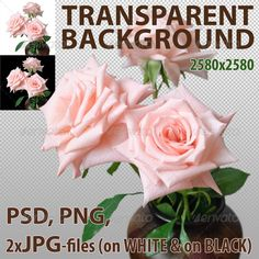 Pink Roses Isolated  —  PSD Template • Only available here! →…