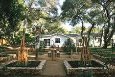 a beautiful potager garden design