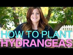 Handy tips for knowing which type of hydrangea you have, when to prune it, how to change the flower color, and general care.