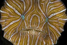Un pesce fantasma a spasso per l'Atlantico - Focus.it