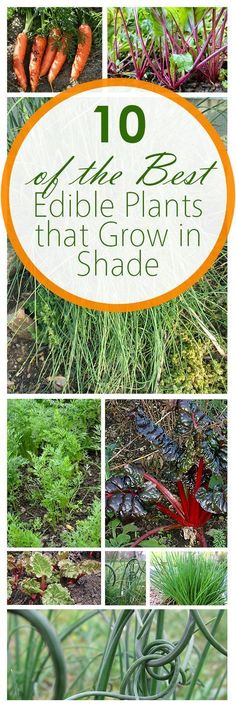 10 of the best edible plants that grow in shade - Plants That Do Well In Shade