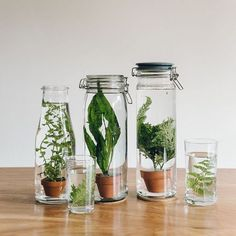 DIY glass garden, terrarium, in some bottles and jars   #terrarium #glassgarden indoor garden. giardino d'inverno da tavolo, in miniatura   Haarkon - Our journal of plants, travel and interiors. *All pictures taken by us. More on our website.