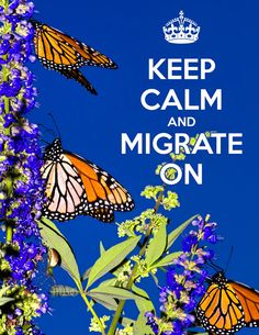 Fall Blooming Plants Give Monarchs Strength to Reach Far Away Migration Destinations